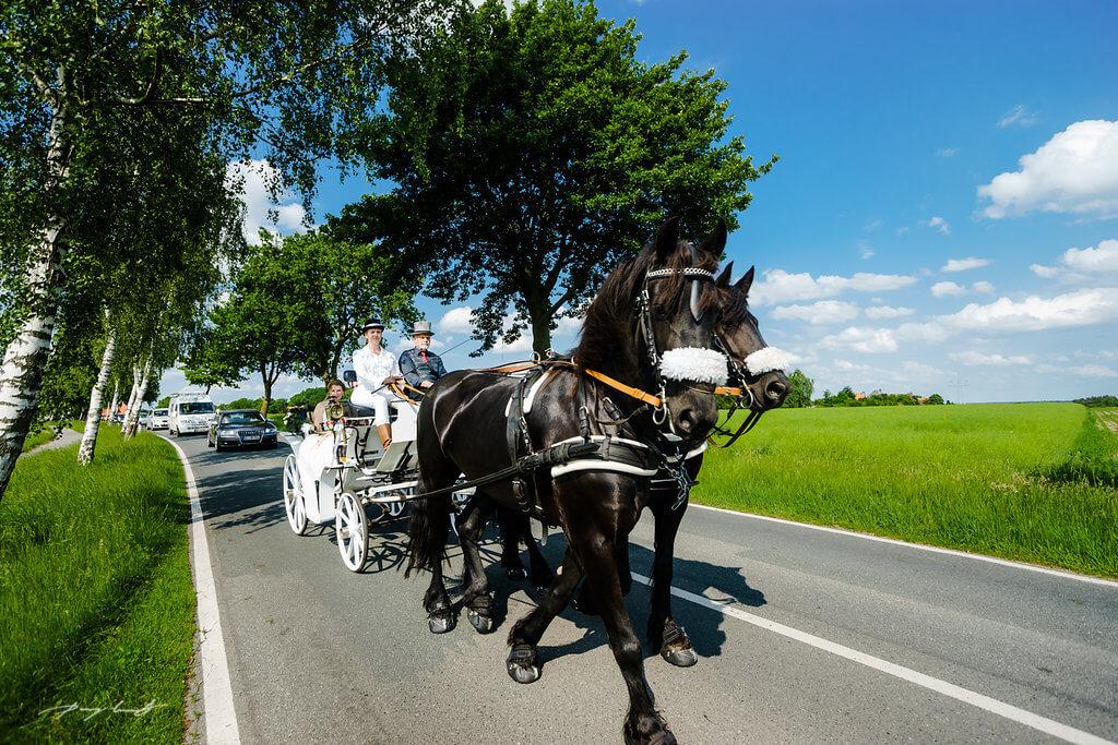 Brautpaar Kutsche Fotograf Pattensen